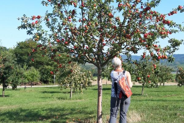 Obst und Weinwanderung