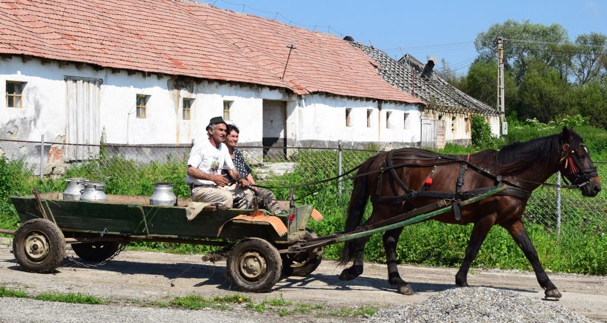 Pferdefuhrwerk Rumänien